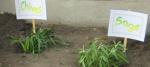 comm garden